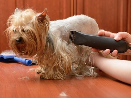 My Pet Groomer Just Smacked the **** Out Of My Pet! Can I sue?